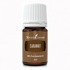 Caraway - Эфирное масло тмина