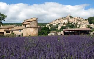 Конкурс Young Living — билет на сбор Лаванды во Франции